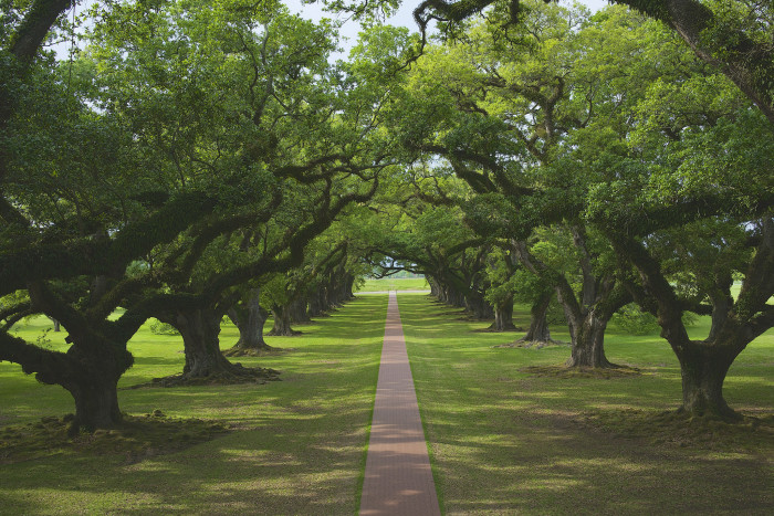 12) The iconic Oak Alley plantation.
