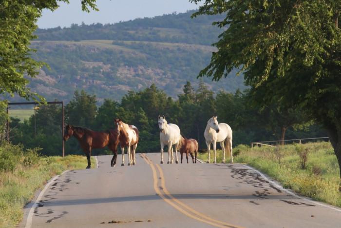 2. Wichita Mountains Wildlife Refuge: Indiahoma