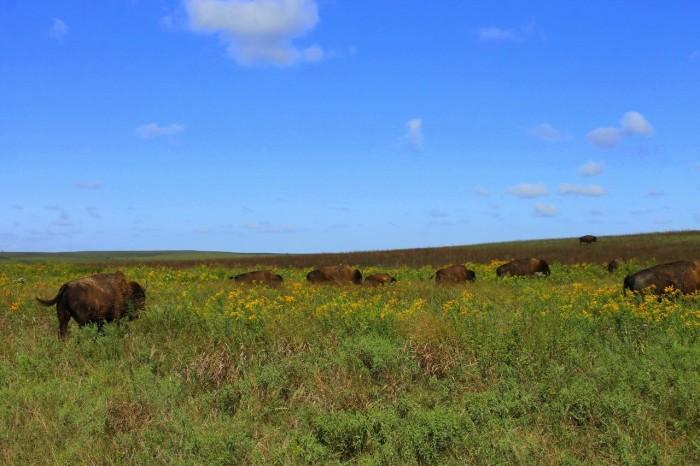 9. Tallgrass Prairie Preserve: Pawhuska