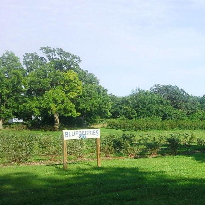 3. Endicott Farms: Liberty-Mounds