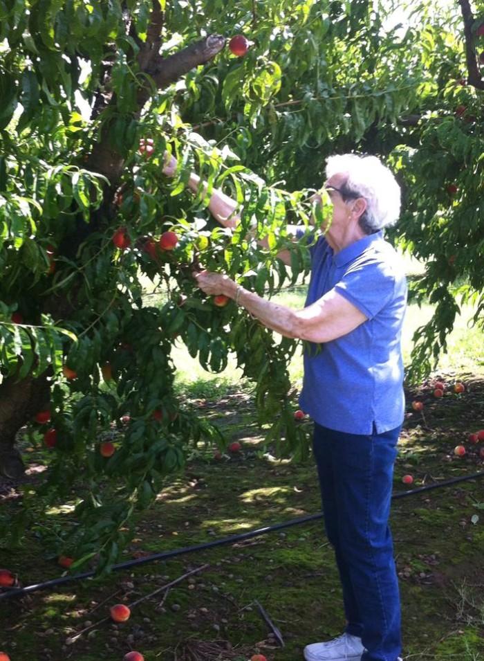 2. Livesay Orchard: Porter