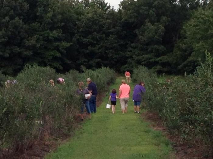 6. Maple Creek Berry Farm: Poteau