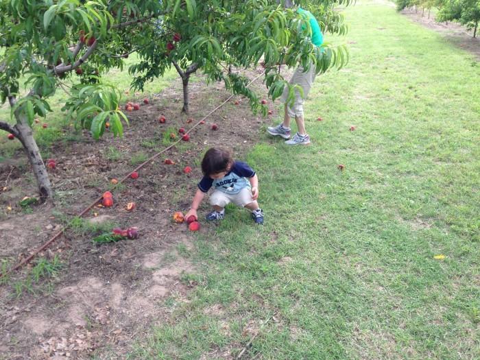 7. Wind Drift Orchards: Harrah