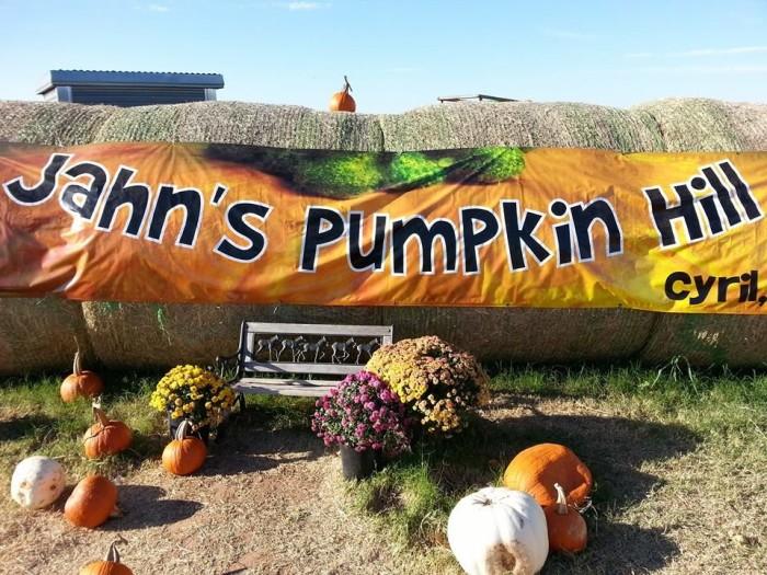 9. Jahns Pumpkin Hill-Cyril