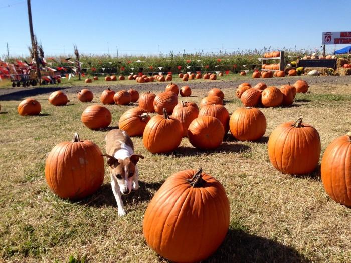 4. Pumpkin Town: Tulsa