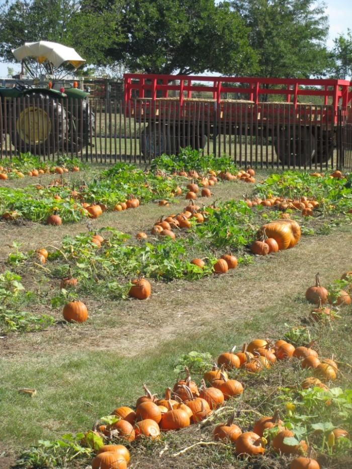 6. Woodbine Farms Pumpkin Patch: Ardmore