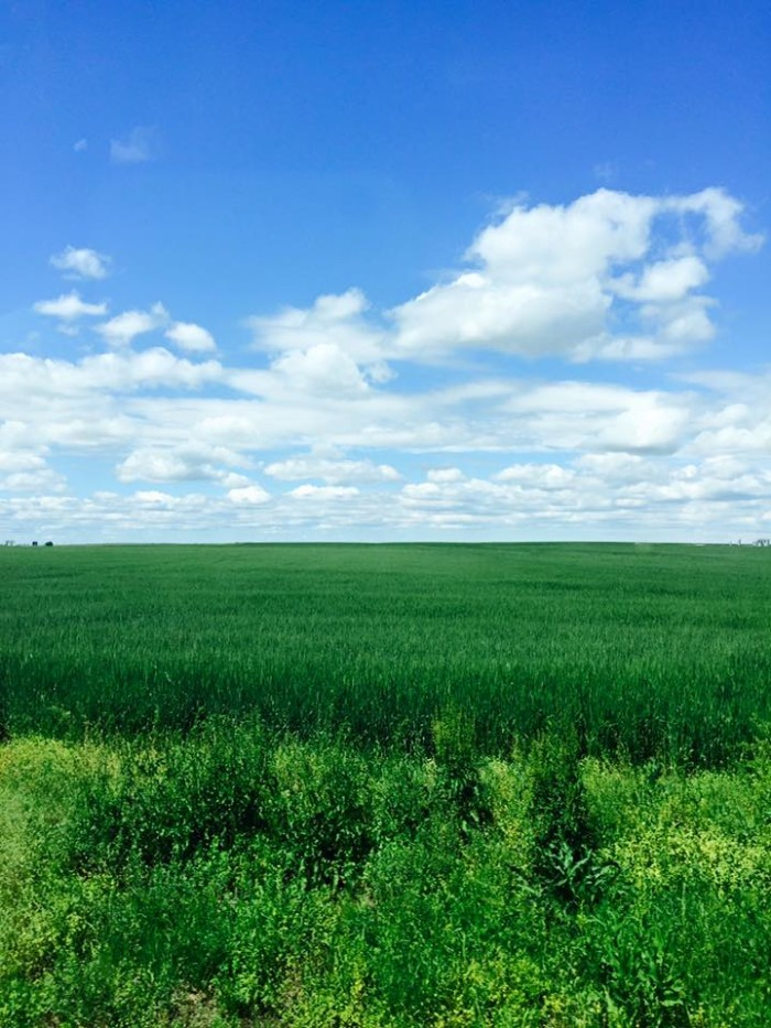 6. The green pasture and blue sky was submitted by Kristen Renee Lucas.