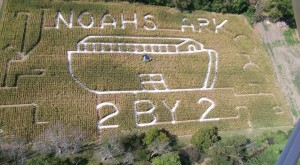 7 Awesome Corn Mazes In West Virginia You Have To Do This Fall