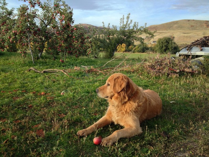 2) Cache County: Paradise Valley Orchard, Paradise Valley