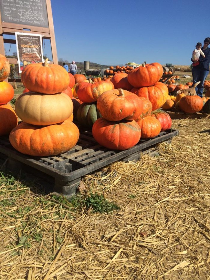 3. Farms start opening their pumpkin patches again.