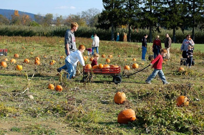 6. Ridgefield Farm and Orchard in Harpers Ferry
