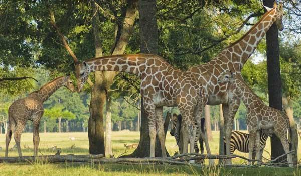 9) Global Wildlife Center