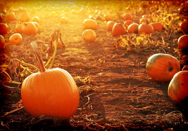 6. Harvest Tyme Pumpkin Patch (17904 Grant St, Lowell)