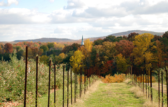 2. Apple Hill Orchard & Cider Mill