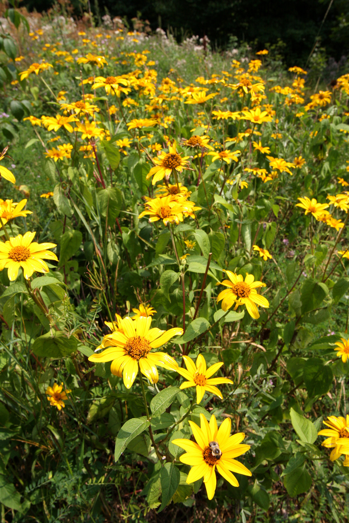 6. This wildflower scene along the highway in Pocahontas County.