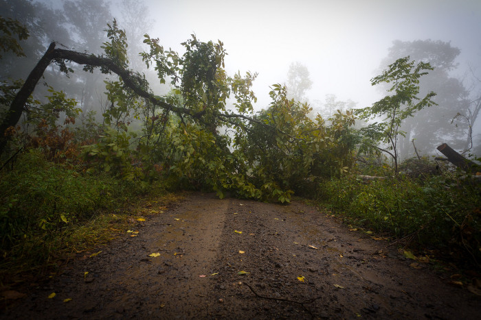 5. Fog and the Fallen Tree