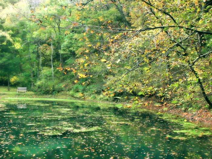 5. Withrow Springs State Park