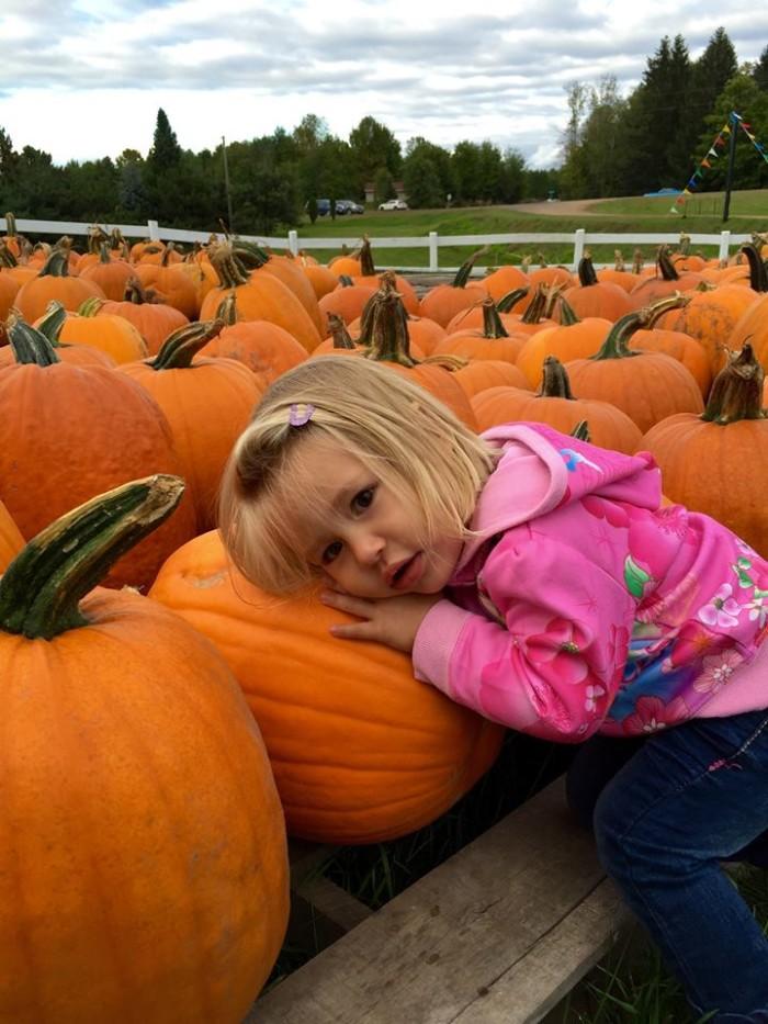 1. Mommsen's Pumpkin Patch