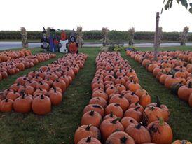 4. Swan's Pumpkin Farm
