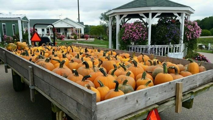 5. Country Bumpkin Farm Market