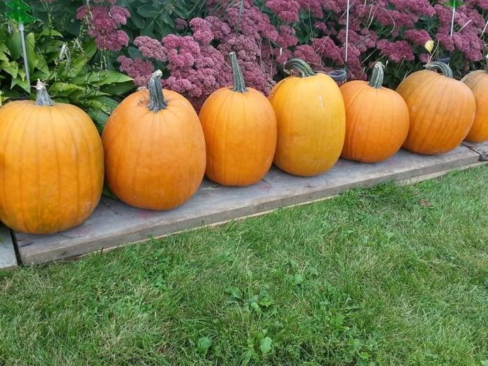 6. Brehmer's U-Pick Pumpkins
