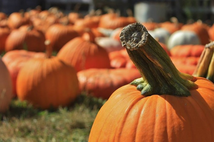 5. Curtis Orchard and Pumpkin Patch
