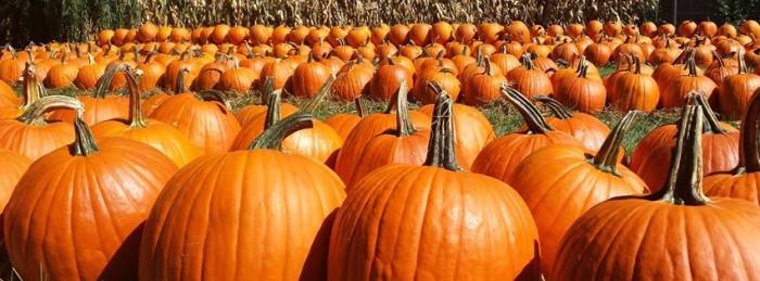 9. Kroll's Fall Harvest Farm