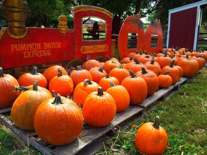10. The Pumpkin Patch