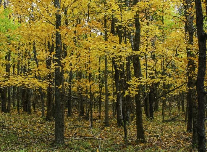 1. Ferne Clyffe State Park