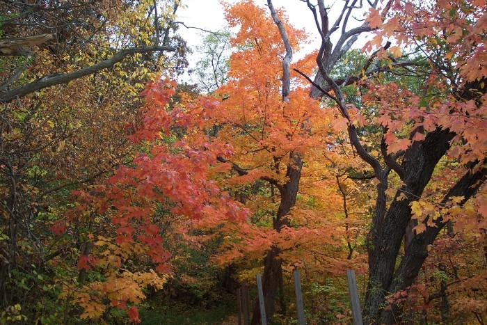 3. Matthiesen State Park
