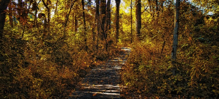 7. Franklin Creek State Park