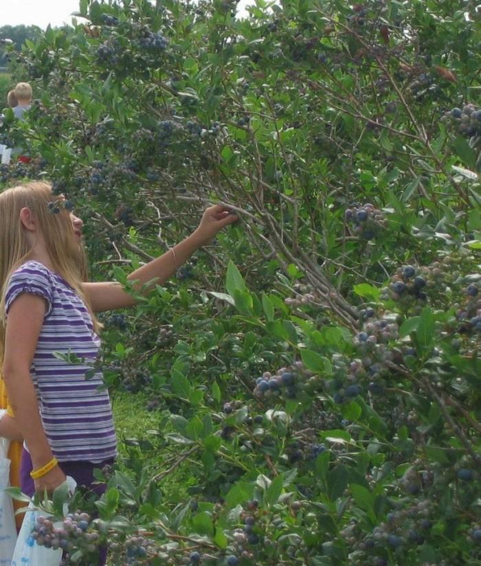 4. Benson Blueberries