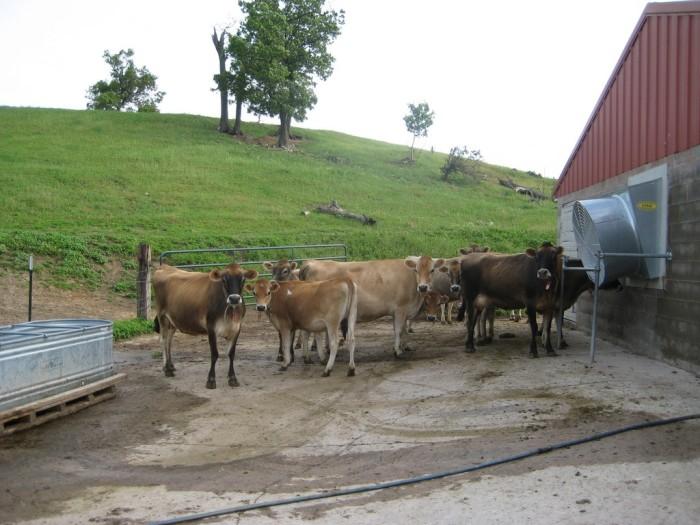 3. Elk Mound