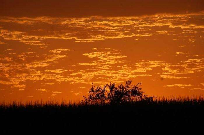 20. Lisa took this photograph of a gorgeous orange sky.