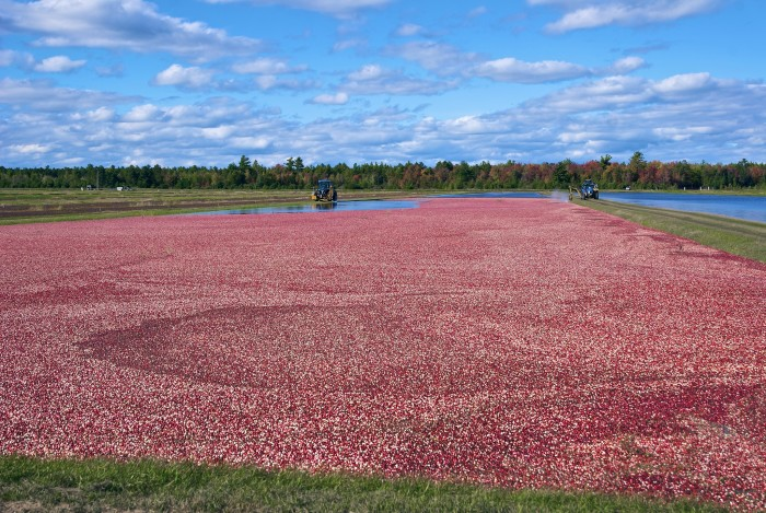 8. Oneida cranberry farm