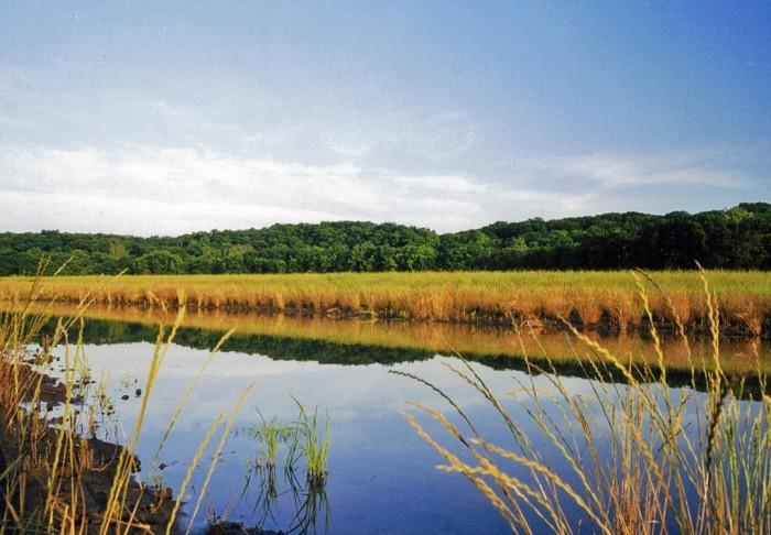 10. Restored wetland at Chinquapin Bluffs