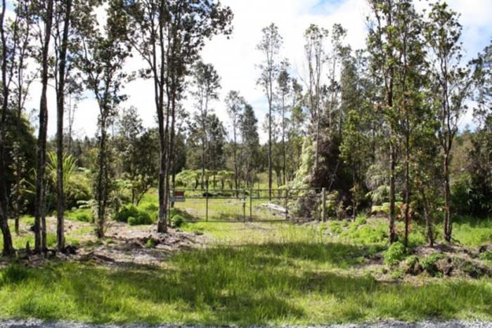 1) Fern Forest