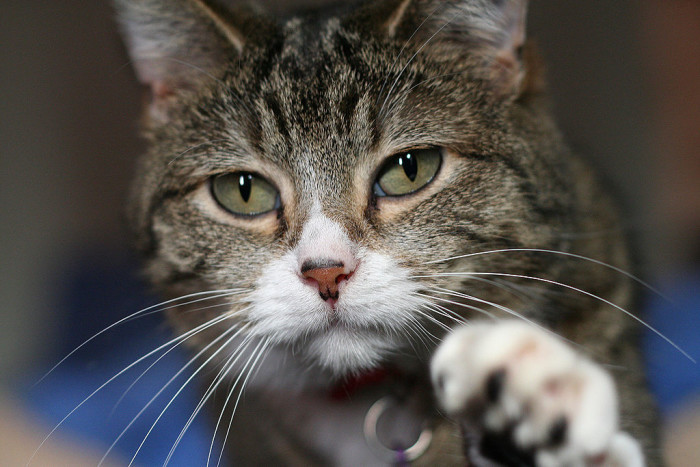 6. Cats may not run loose without having been fit with a taillight. (Sterling)