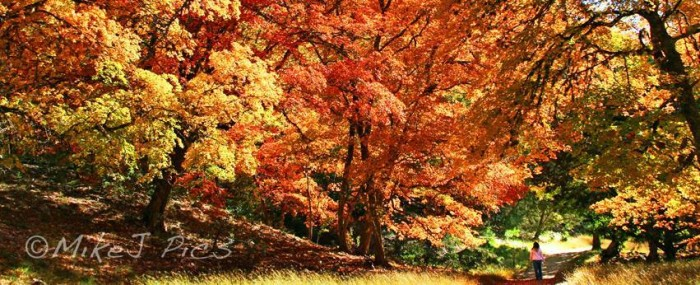 11) GORGEOUS fall colors in the Hill Country, captured beautifully by Mike Jones.