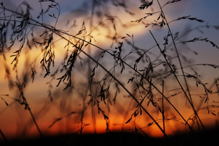 13. Here's a nice artsy photo. This is what sunset looks like while you're reclining in the grasses in Strawberry. What better way to end the day?