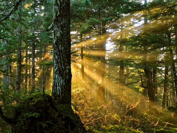 8) Tongass National Forest