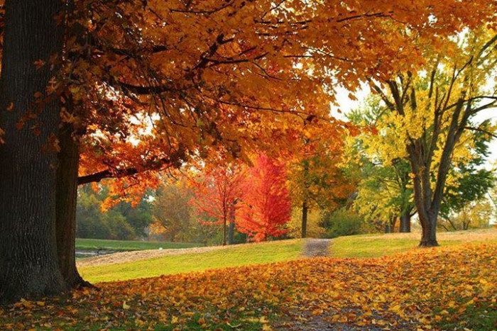 4. Cara Hines Conwell submitted a picture to our Facebook page of Memorial Park in Huntington. I just love what fall does to the trees!