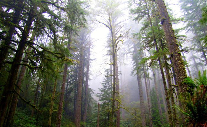5) Elliott State Forest