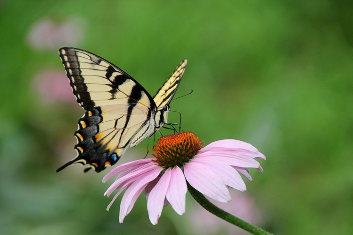 3. This butterfly stops for a quick drink in Syracuse.