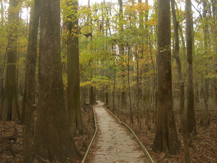 know what it's like to walk under, through, and around the oldest track of hardwood bottomland in the U.S., or...