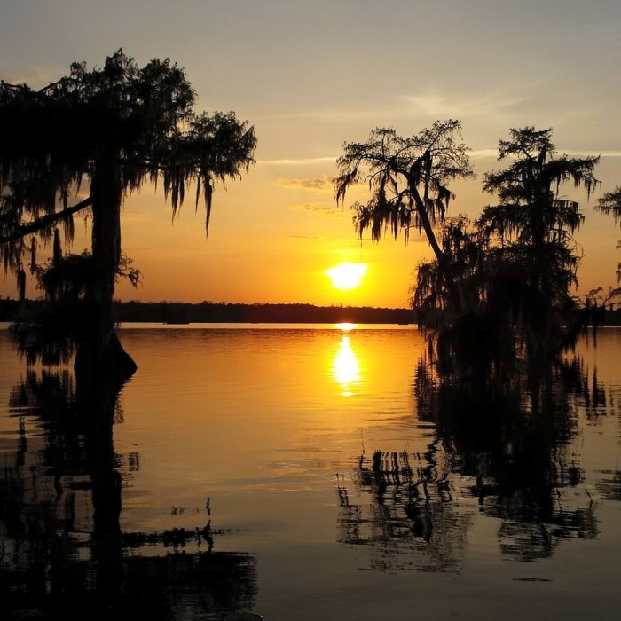 4) Sun setting between the cypress trees.