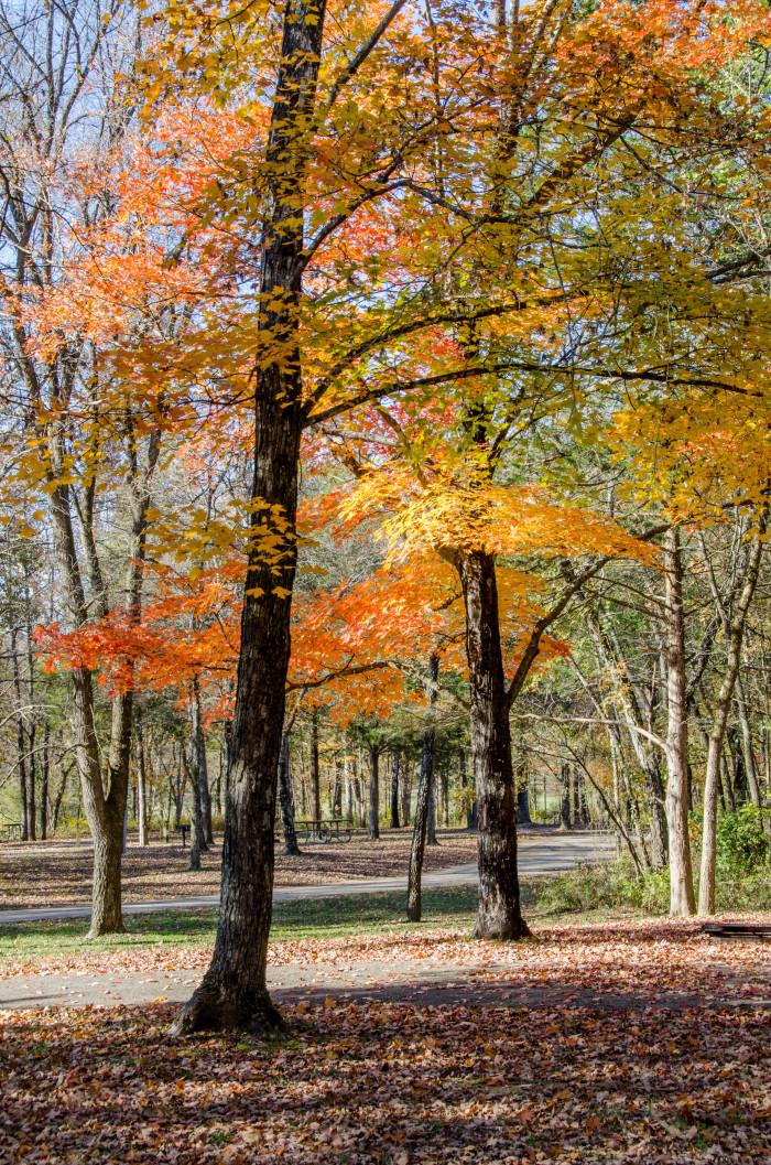 11.Sam A. Baker State Park, southeast Missouri