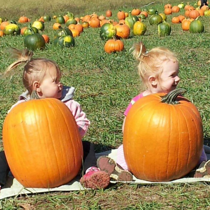 10.Happy Hollows Pumpkin Patch, Crocker