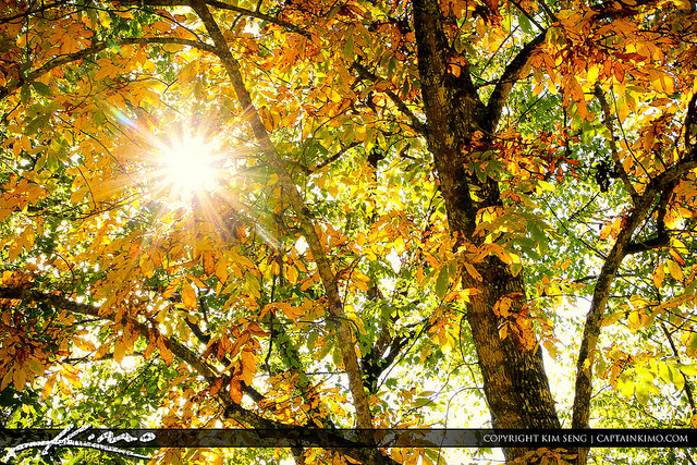 1. Sunny leaves