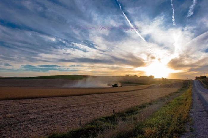 2. Antonia Ybarra took this wonderful shot of harvest time outside of Sioux City.